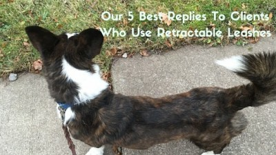 Our 5 Best Replies To Clients Who Use Retractable Leashes