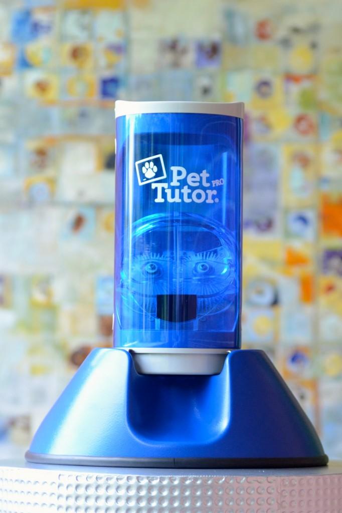 pet tutor