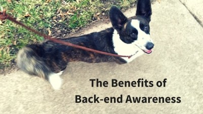 Precise Obedience: Exercises To Increase A Dog's Back End Awareness