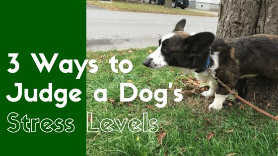dog's stress levels
