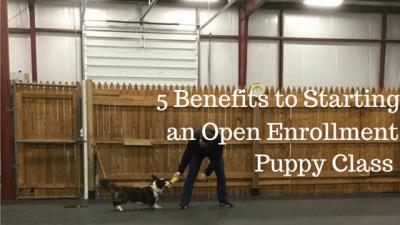 5 Benefits to Starting An Open Enrollment Puppy Class