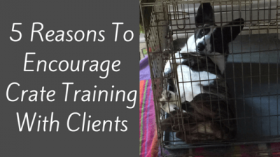 5 Reasons To Encourage Crate Training With Clients