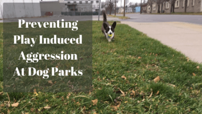 Preventing Play Induced Aggression At Dog Parks