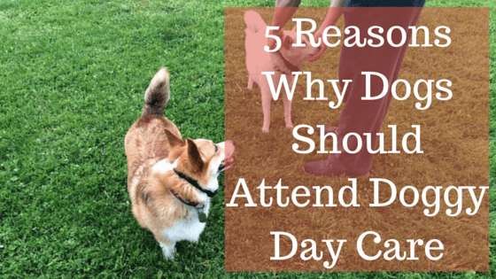 5 Reasons Why Dogs Should Attend Doggy Day Care