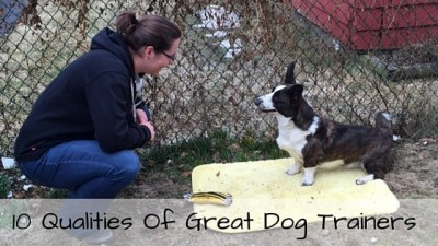 10 Qualities Of Great Dog Trainers