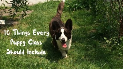10 Things Every Puppy Class Should Include