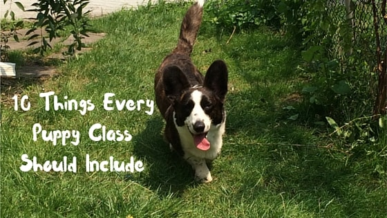 10 Things Every Puppy Class Should Include-min