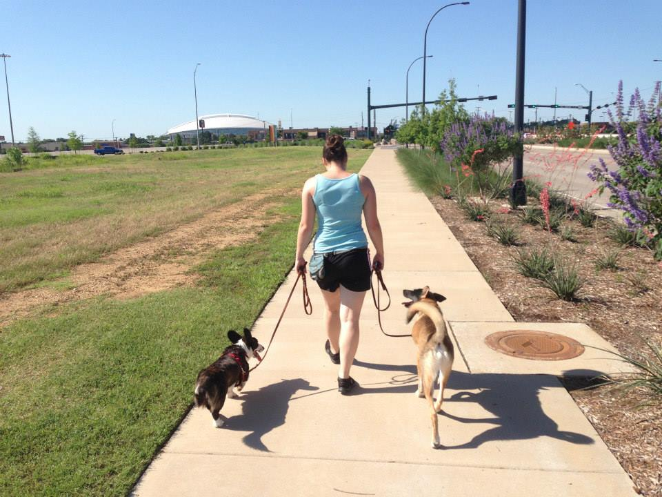 3 Approaches to Teaching Loose Leash Walking
