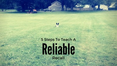 5 Steps To Teach A Reliable Recall