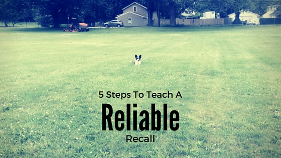 5 Steps To Teach A Recall