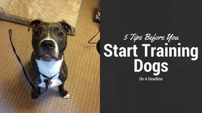 Tips Before You Start Training Dogs On A Deadline