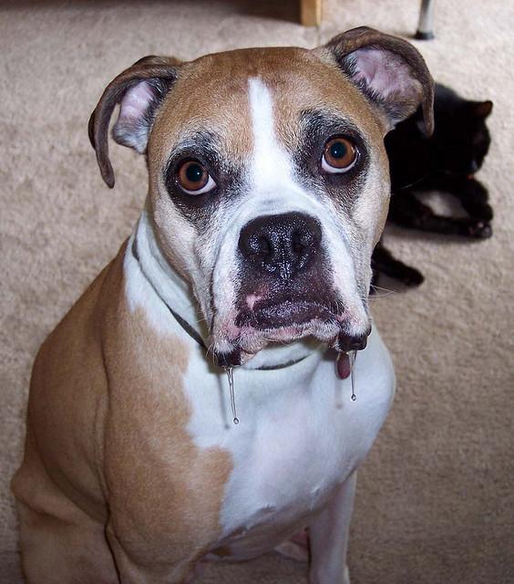 High Value Dog Treats Training