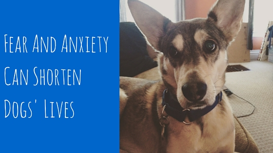 Fear And Anxiety Can Shorten Dogs' Lives