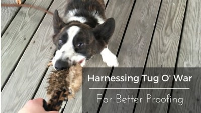 Harnessing Tug O' War For Better Proofing