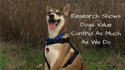Research Shows Dogs Value Control As Much As We Do