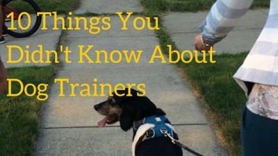 10 Things You Didn't Know About Dog Trainers