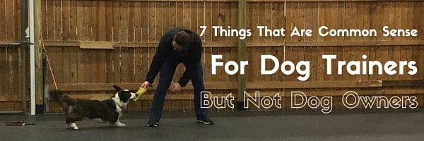 7 Things That Are Common Sense For Dog Trainers But Not Dog Owners