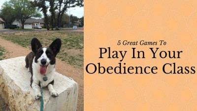 5 Great Games To Play In Your Obedience Class