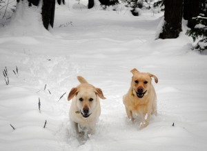 Image by Erin Bessey - Bessey's Positive Paws