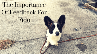 The Importance Of Feedback For Fido