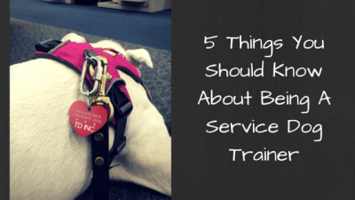 5 Things You Should Know About Being A Service Dog Trainer