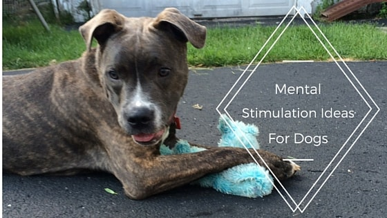 mental stimulation ideas for dogs-min