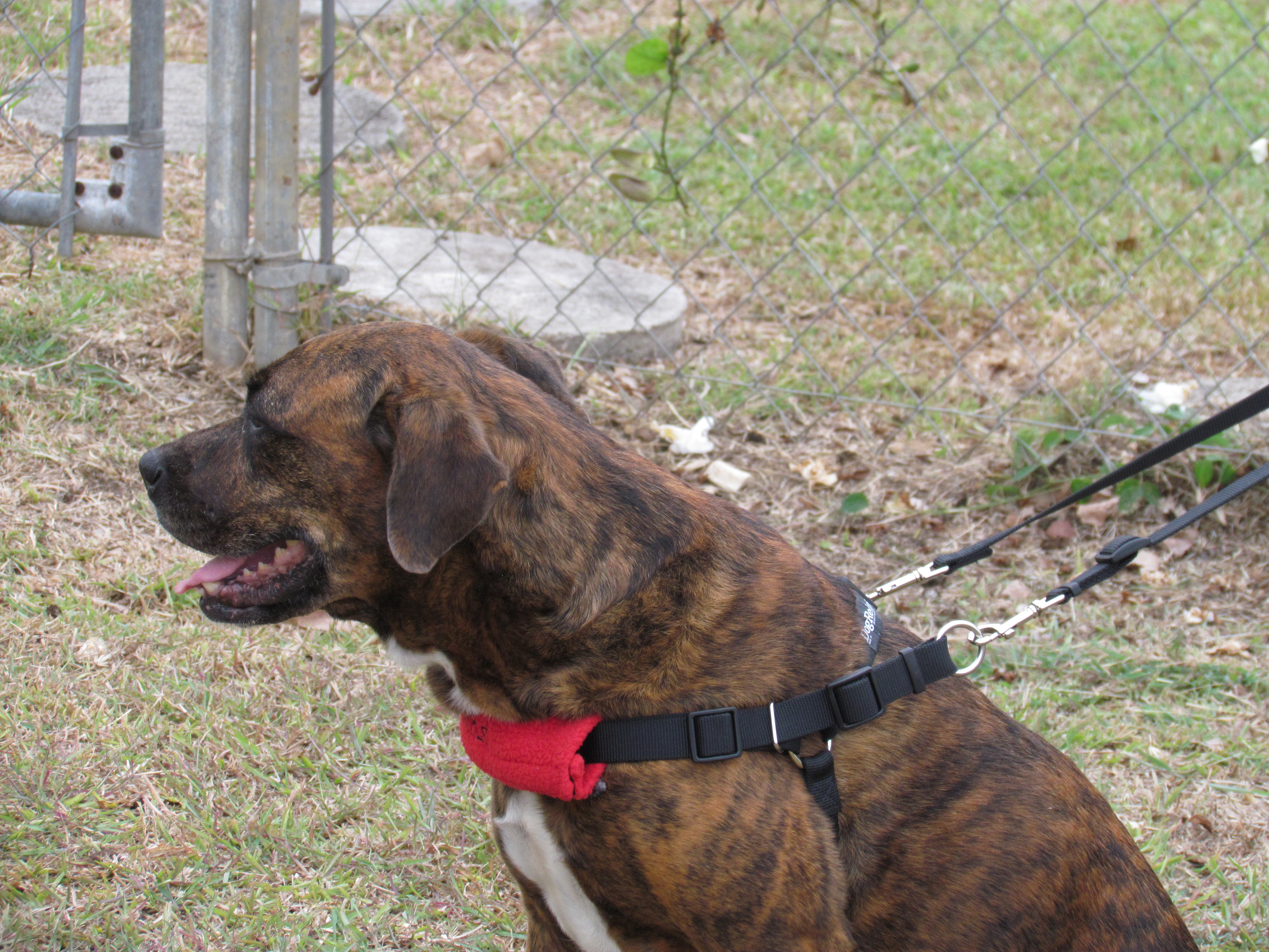 Review: DogReins No-Pull Harness