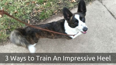3 Ways to Train An Impressive Heel
