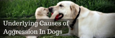 Underlying Causes Of Aggression In Dogs