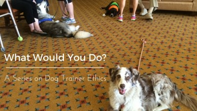 What Would You Do? A Series on Dog Trainer Ethics