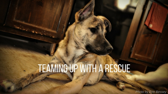 teaming up with a rescue as a dog trainer