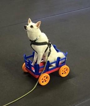 Interview With International Dog Parkour Association