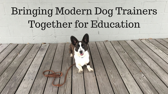 Bringing Modern Dog Trainers Together for Education