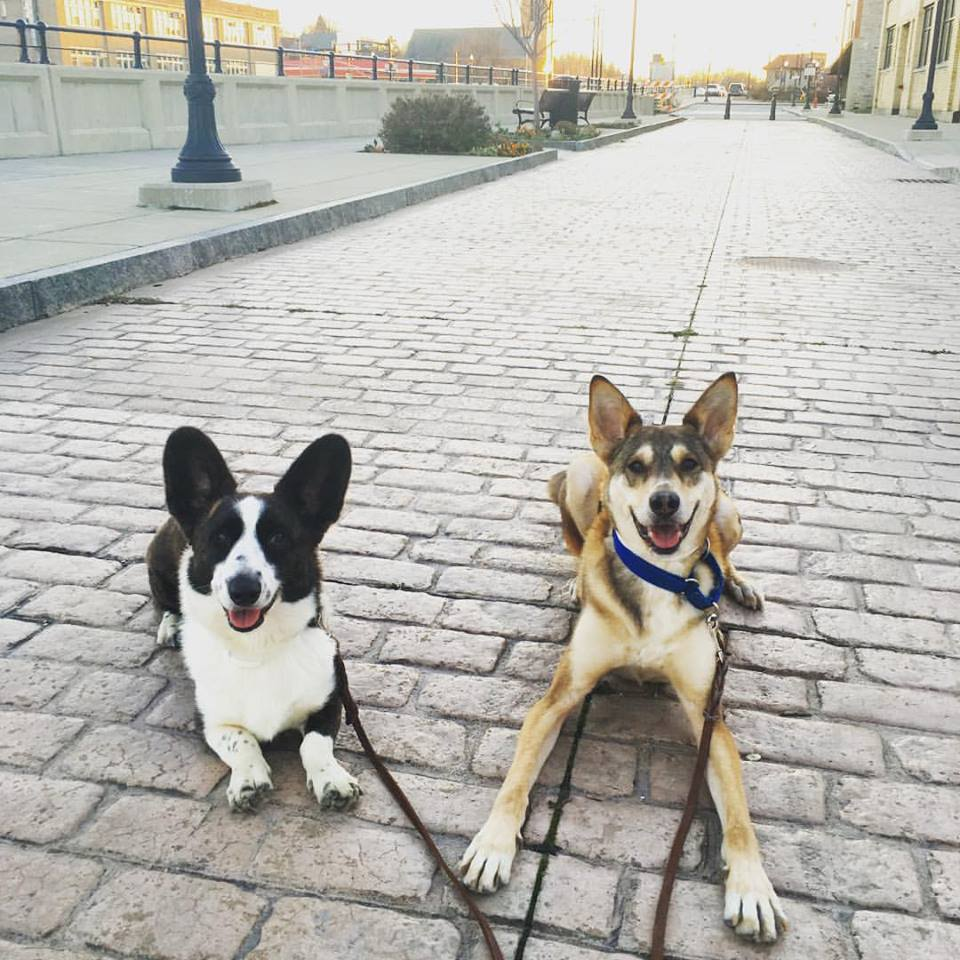 marketing tips for dog trainers