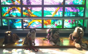 Dog group in front of a stained glass window