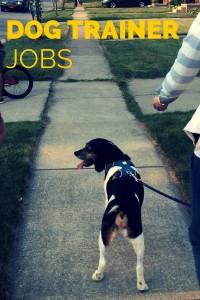 OPEN DOG TRAINER JOBS