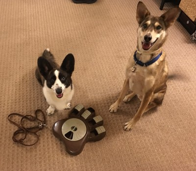CleverPet: The New Game Console For Dogs