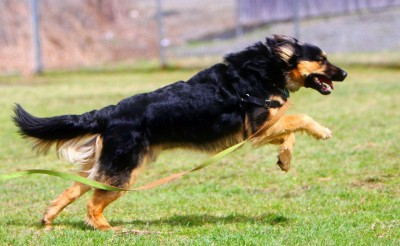 5 Training Games for Puppy Classes
