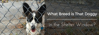 Guest Post: What Breed is That Doggy in the Shelter Window?