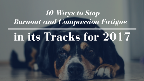 Compassion Fatigue in Pet Professionals