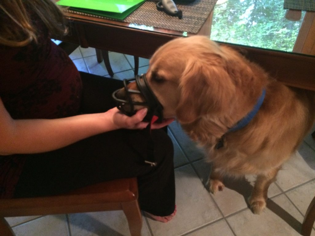 dog training client compliance tips