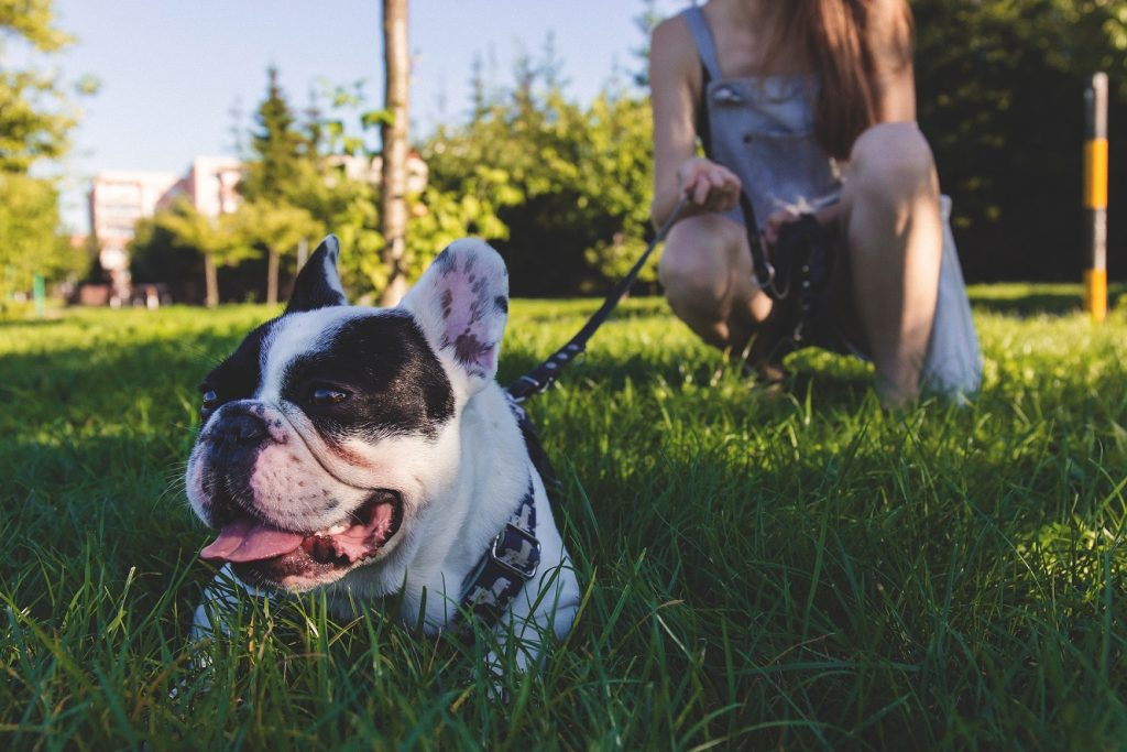 Common Obstacles to Starting a Dog Training Business