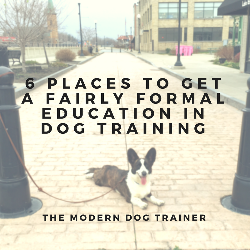 6 Places to Get a (Fairly) Formal Education In Dog Training