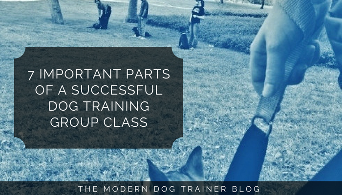 how to run a successful group dog training class
