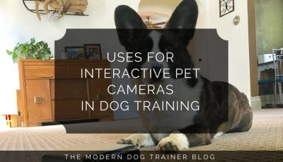 Uses for Interactive Pet Cameras in Dog Training