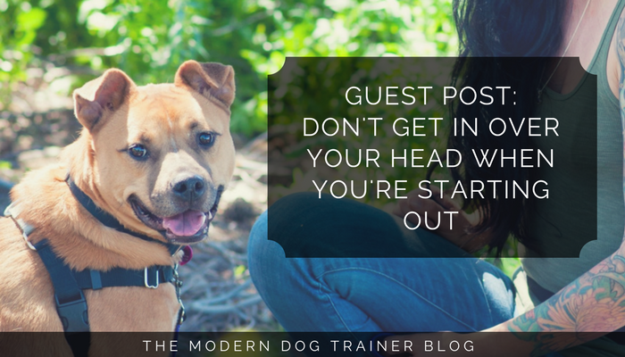 avoid taking on clients that are too risky when starting out as a dog trainer