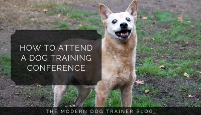 How to Attend a Dog Training Conference