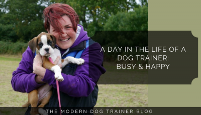 A Day In The Life Of A Dog Trainer: Busy & Happy