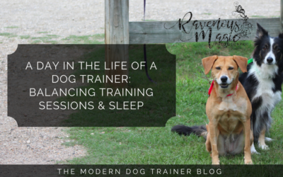 A Day In The Life Of A Dog Trainer: Balancing Training Sessions & Sleep