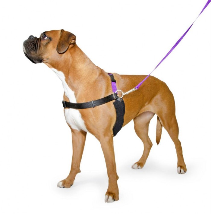 Best Dog Harnesses for Training